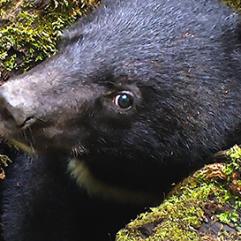 les-oursons-orphelins-de-siberie-v